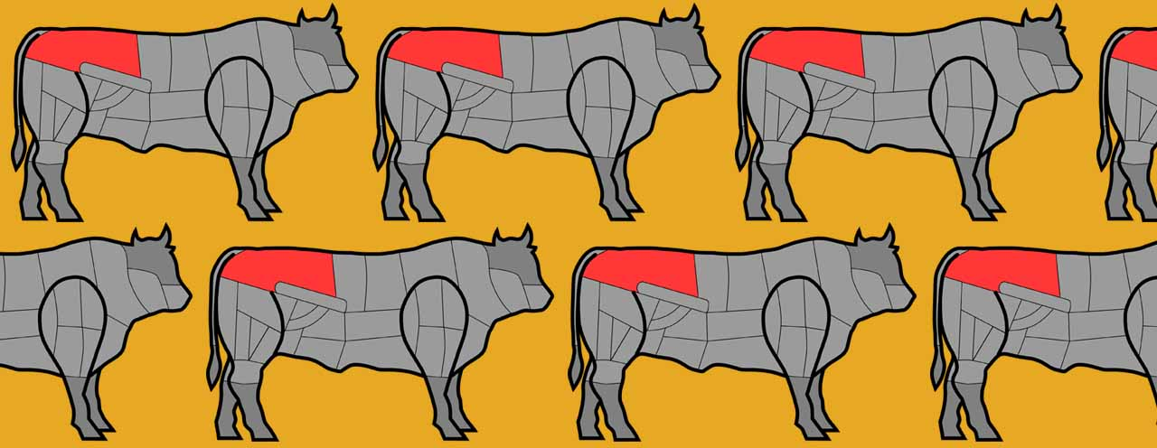 cow share crowd vector fc