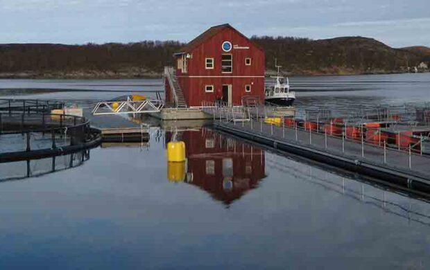 fishmeal free salmon fc