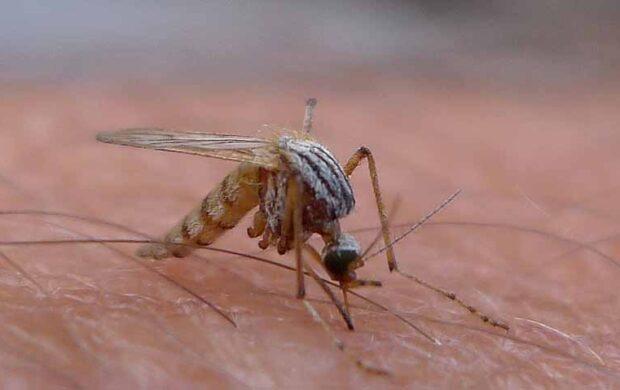 mosquito hero copy