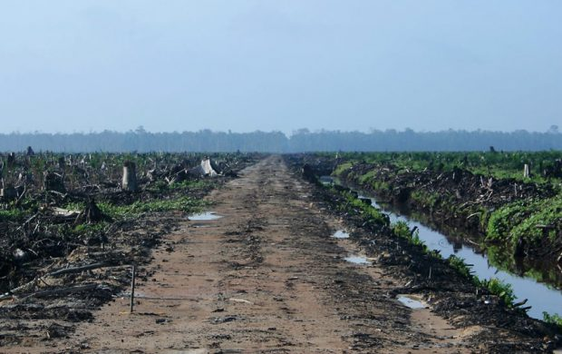 tfci-palm-deforested - Union of Concerned Scientists
