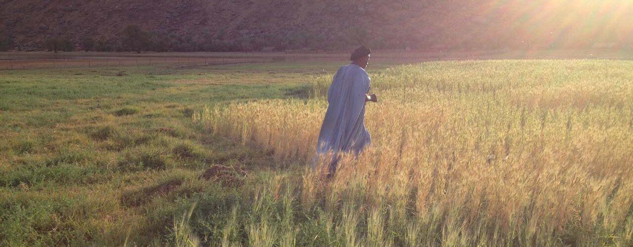 18 Farmers growing durum in the oasis