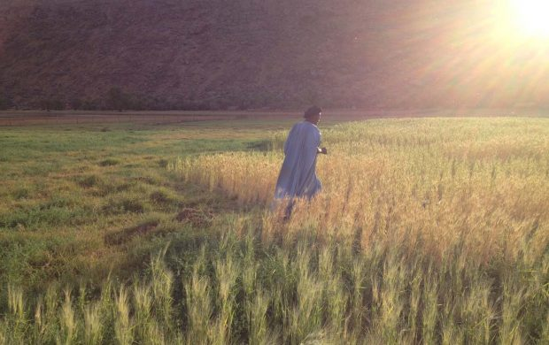 18 Farmers growing durum in the oasis