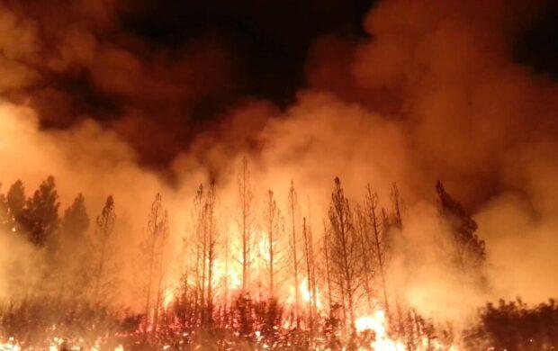 Forest Fire - Wikimedia