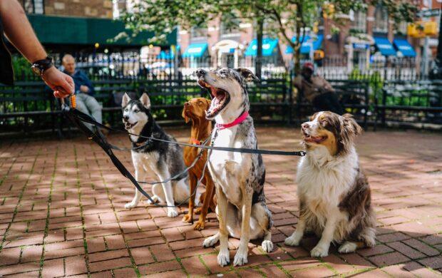 Dogs by Matt Nelson