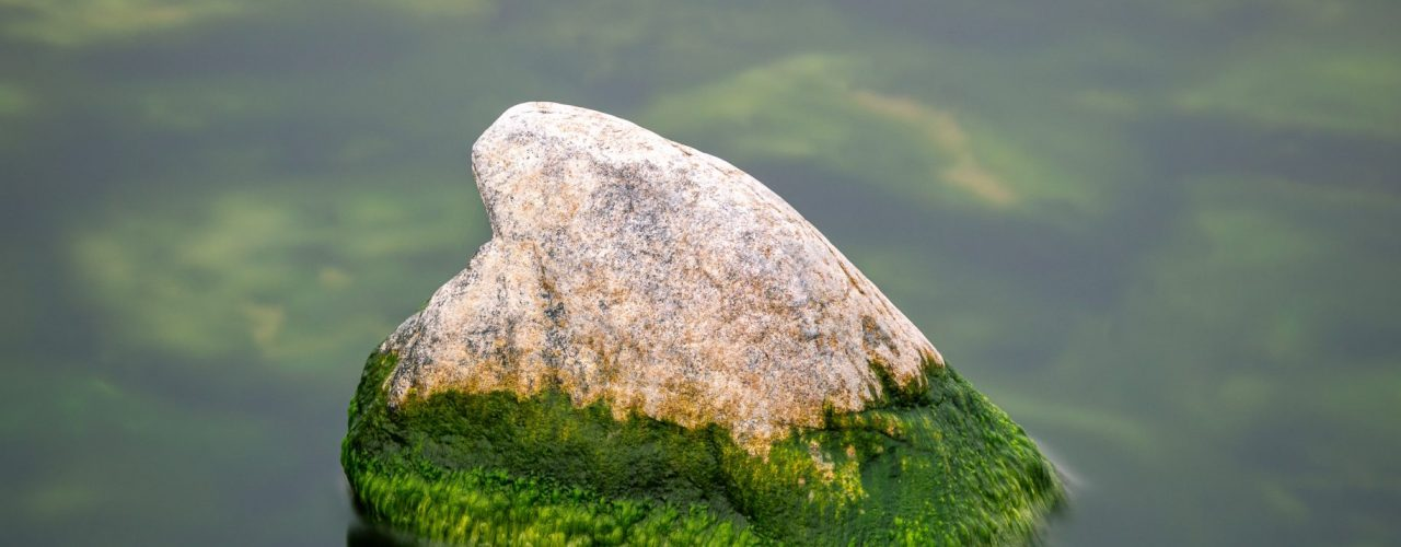 gray rock on green water