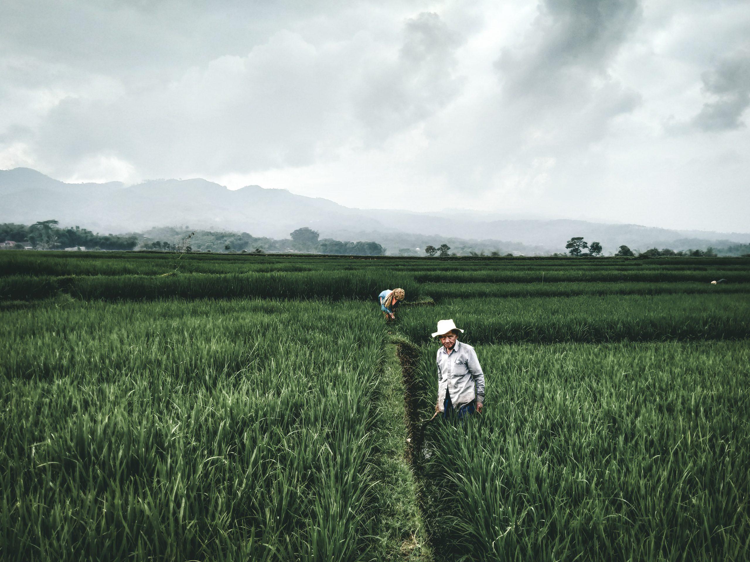 girl in white dress walking on green grass field during daytime