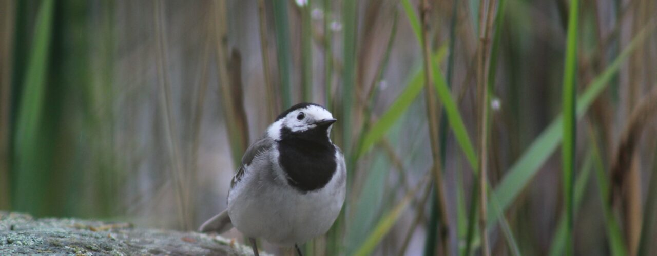 white and black bird on gray rock